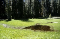 Malerische Wiese im Yosemite Nationalpark