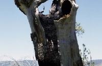 Verkohlter Baum