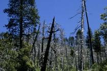 Überreste des Waldbrands 1990