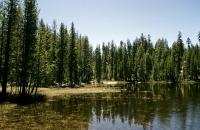 Kleiner See am Tioga Paß