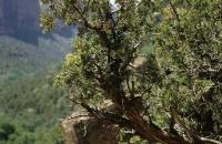 Knorrige Bäume und Sträucher