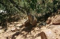Ein zutrauliches Erdhörnchen