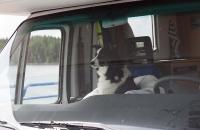 Wohnmobil mit Hund als Beifahrer