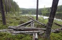 Urige Landschaft am See