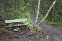 Knorriges Bankerl im Wald