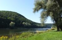 Grüne Landschaft an der Donau