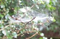 Spinnennetz im Morgennebel