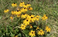 Blumen am Wegesrand