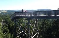 Stiegen und Stege am Baumkronenweg