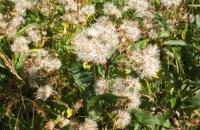 Pflanzen beim Wildebensee