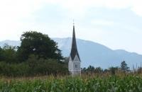 Aus dem Maisfeld ragt ein Kirchturm :-)