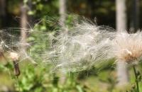 Wehendes Gras am Wegesrand