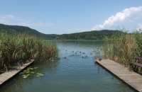 Schwimmende Enten am Turnersee