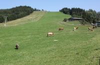 Pferdekoppel auf der Simonhöhe