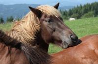 Pferde auf der Simonhöhe