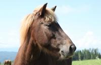 Pferd auf der Simonhöhe