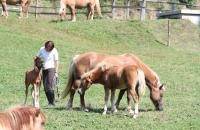Pferde auf der Koppel auf der Simonhöhe