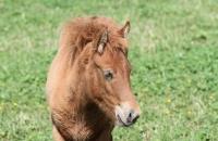 Süßes, junges Pferd