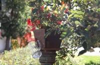 Ein Glaskrug an einem Brunnen