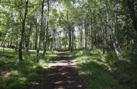 Waldweg in Vitlycke