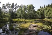Teich in Vitlycke