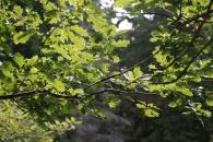Schön beleuchtete Blätter