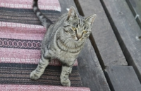 Eine ganz freche, schwedische Katze :-)