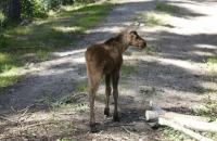 9 Wochen alt und schon so lange Beine :-)