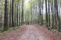 Wanderung zu den herbstlichen Langbathseen