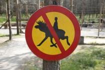 Wahrscheinlich versuchten schon einige auf den Elchen zu reiten
