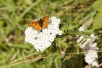 Ein schöner Schmetterling am Wegesrand