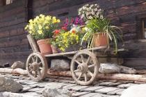 Blumen-Leiterwagerl am Finailhof