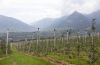Blick über Obstplantagen und Schenna