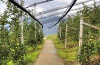 Der Waalweg führt zwischen den Obstkulturen