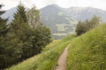 Der Waalweg verläuft aus dem Wald