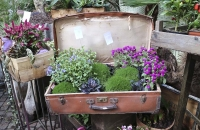 Pflanzen in einem originellen Geschäft in Bozen