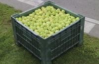 Apfelernte in Naturns