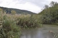 Schilf am großen Montiggler See