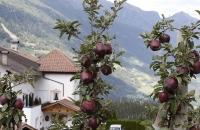 Rote Äpfel in Verdins