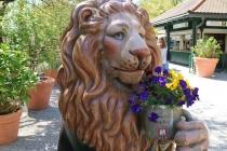 Ein Löwe im Biergarten