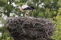 Der Storch ist gelandet