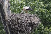 Bei den Bauarbeiten im Nest