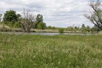 Landschaft an der March