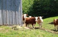 Witzig, wie die Kuh um die Ecke guckt :-)