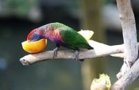 Bunter Vogel im Park