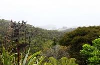 Blick auf die Bucht von Tutukaka