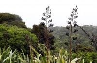 Pflanzeneindrücke