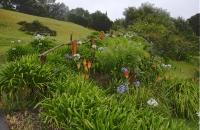 Saftige Pflanzenwelt in Kerikeri