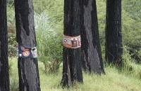 Tücherkunst auf Baum