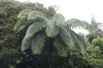 Pflanzenwelt im Waipoua Forest